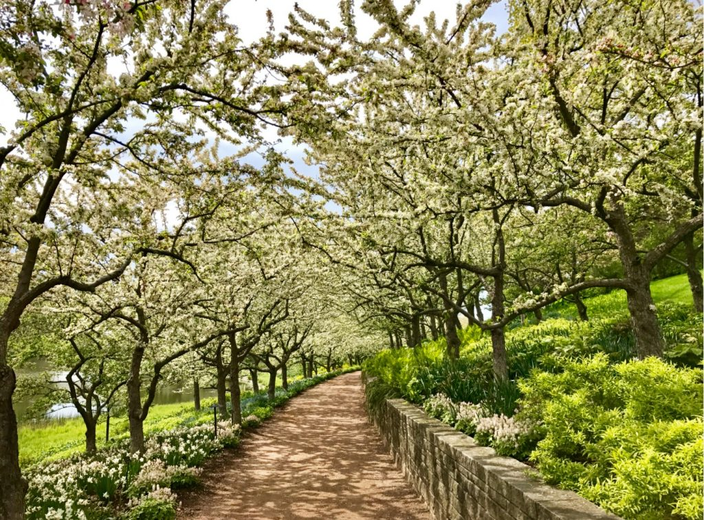 Photo of blooming trees showing how spending time in nature can prevent burnout