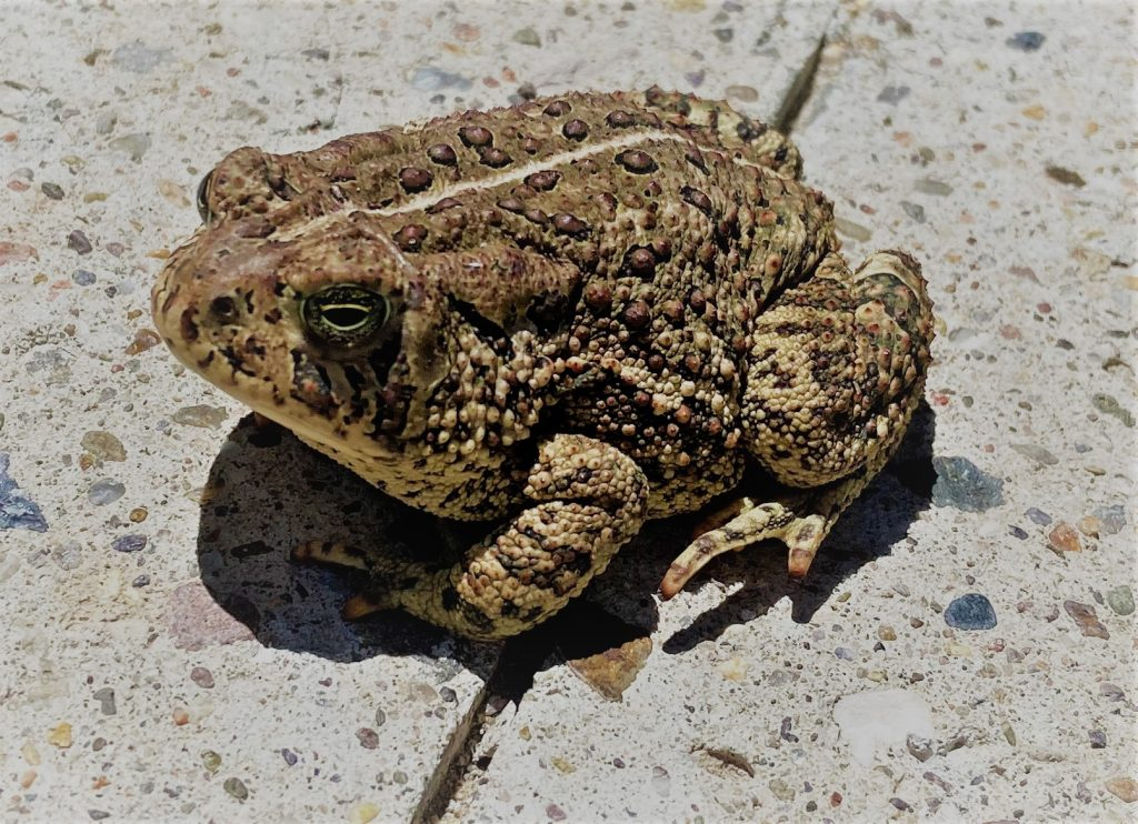Image of toad showing how to find joy in nature